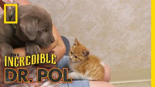 Adorable Duo Gets Help | The Incredible Dr. Pol