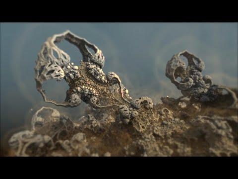 "Sonarpilot - ""Fossil"""