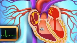 Сердце. Строение сердца - развивающий мультфильм для детей