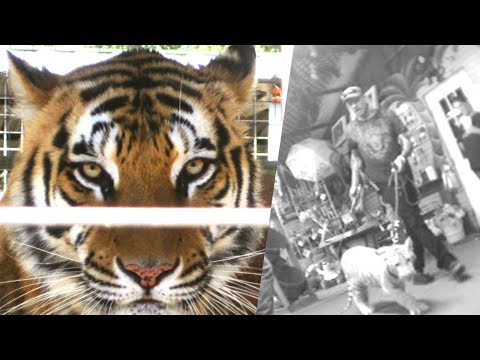 Undercover Video of Joe Exotic and Staff Hitting and Abusing Tigers