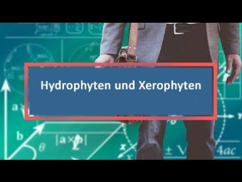 Hydrophyten und Xerophyten