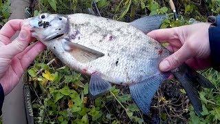 Рыбалка на московском море у могильного