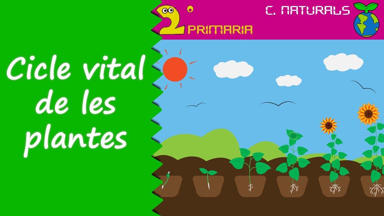 Ciències de la Naturalesa. 2n Primària. Tema 5. El cicle de les plantes