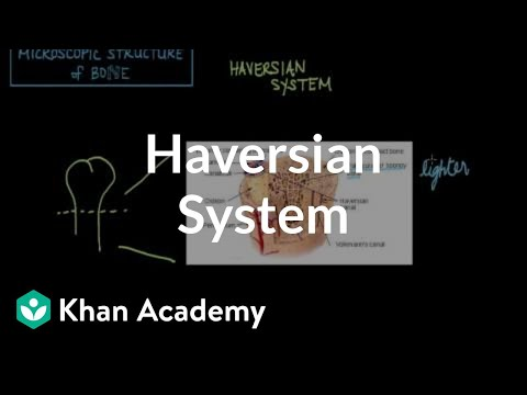 Microscopic Structure Of Bone The Haversian System Video Khan Academy