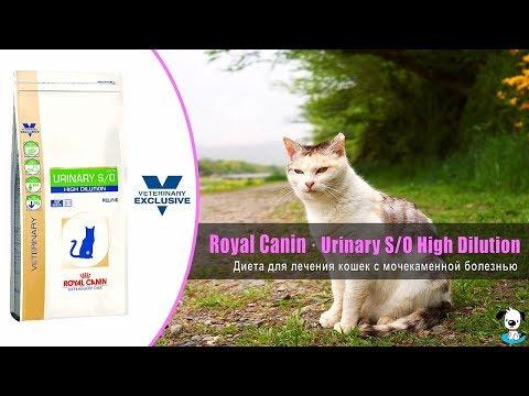Диета для кошек при лечении мочекаменной болезни · Royal Canin Urinary S/O High Dilution