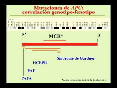 Cancer de pancreas genetico