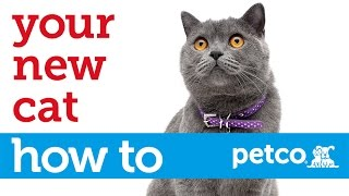 How to Care for Your New Cat (Petco)