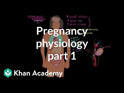 Pregnancy physiology I (video)   Khan Academy
