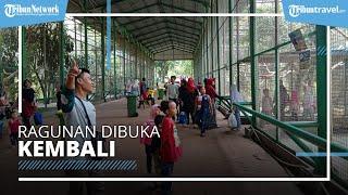 TM Ragunan Dibuka Kembali, Pengunjung Hanya Diperbolehkan Berasal dari Jakarta