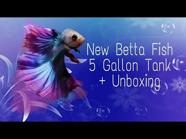 New betta fish 5 gallon tank + unboxing