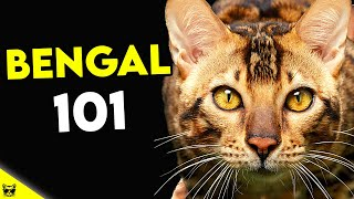 Must Watch BEFORE Getting a BENGAL CAT | Bengal Cat 101