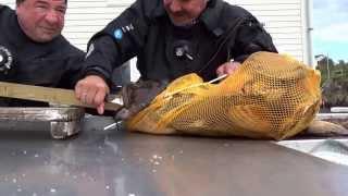 Смотреть онлайн Морской черт чуть не оставил рыбака без руки