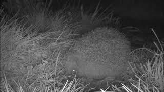 Wildlife Trail Camera - 5.4.2019