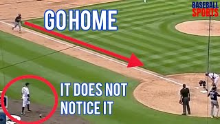 MLB | Unexpected Neglect