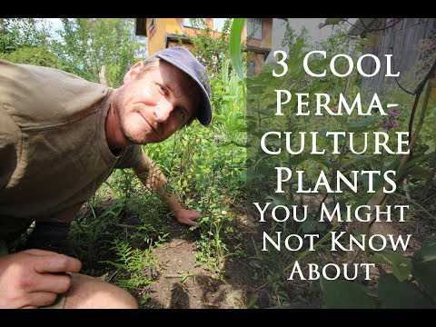 , title : '3 Rare and Easy-to-Grow Permaculture Plants You Might Not Know About