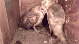 Snuggly, cuddly, beak to beak, sleeping cheek to cheek, add a hork equals Mel and Syd.11-21-19