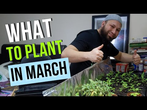What Can I Grow In March  - What To Plant In March