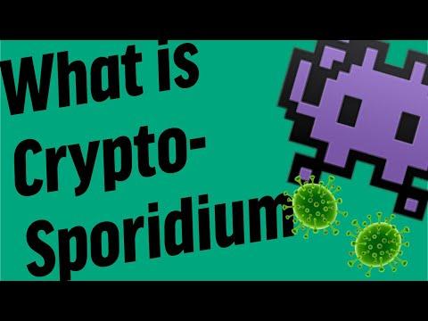 Papiloma virus precio