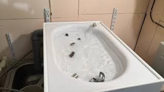 Автоматический кошачий туалет. Ремизова Питер.