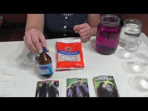 Как подготовить семена баклажанов к посеву.