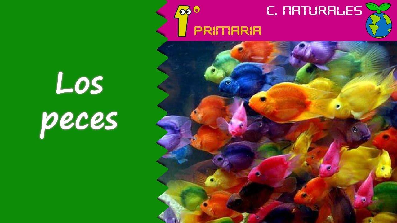 Ciencias de la Naturaleza. 1º Primaria. Tema 5: Los peces