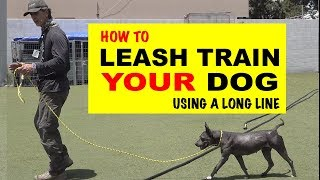 How To Leash Train Your Dog Using A Long Line - Robert Cabral Dog Training Video