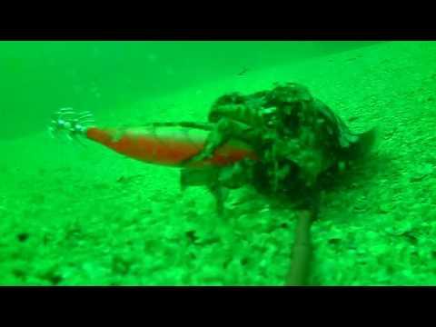 Fiskeri efter blæksprutter