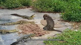MONKEY VS 4 ALLIGATORS