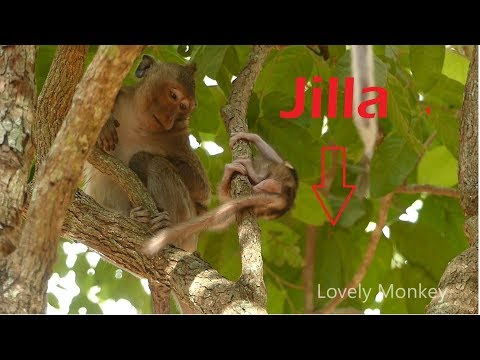 Lesson 1 ! Teacher Kari Teach Baby Jilla How To Grab and Cling On the Tree Without Mom Help.