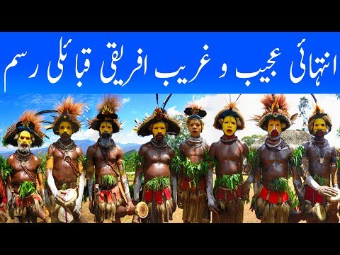 the practice and culture of the yanomano tribe The evolution of prestige: freely conferred deference as a  a novel practice or  picture of the culture of a new guinea tribe drawn from.