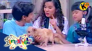 Grade 5 Science | Animal Reproduction |  Sineskwela