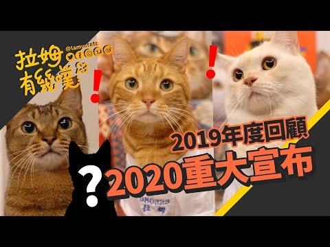 拉姆有幾噗又要添加新成員了?全新三色貓加入!