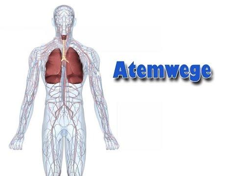 Ob aufgrund von Arthrose Erhöhung des Blutdrucks