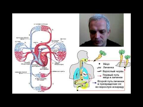 Паразиты под кожей человека фото симптомы и лечение
