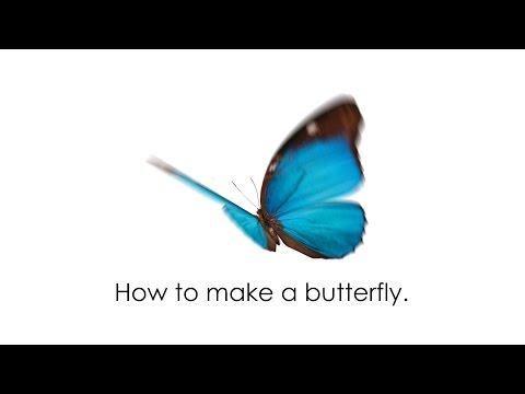 Animate Butterfly Bird - Naijafy