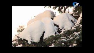 МЧС предупреждает об усилении морозов в Новгородской области