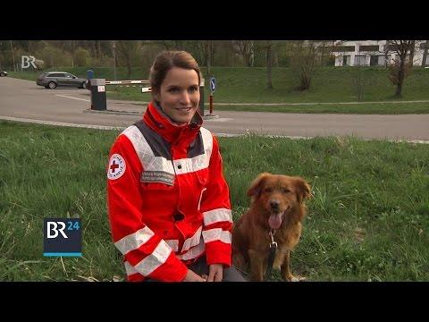 Vom tapsigen Welpen zum Rettungshund | BR24