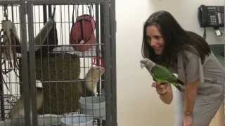 Center of Avian and Exotic Medicine Tour