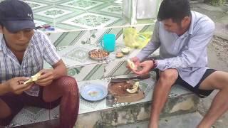 Giống Dừa Quý đây, Uống Nước ăn Cả Vỏ   Phần 2