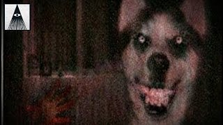 Creepypasta - Smile.Dog