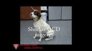 Shocker gets his shoulder fixed.mp4