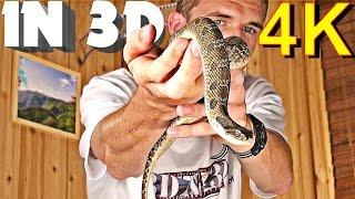 3D Video EXTREME 4K (Scary Snake!)