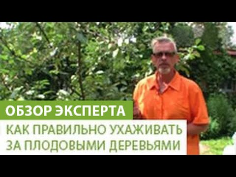 Как правильно ухаживать за плодовыми деревьями