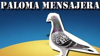 Paloma Mensajera |La maratonista de los cielos| (Animales del Mundo) |Resubido|