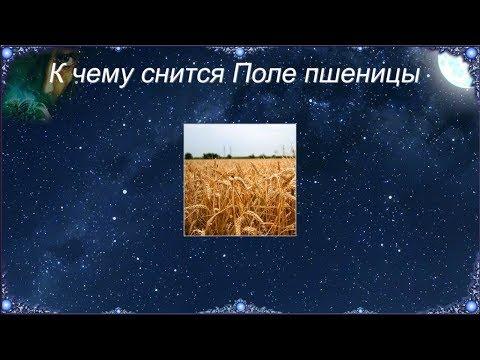 К чему снится Поле пшеницы (Сонник)