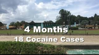 Træner gav væddeløbshunde kokain