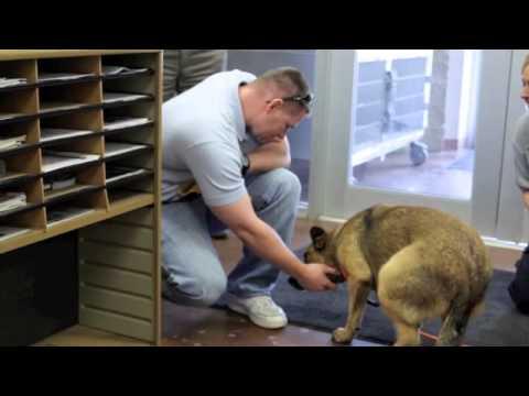 Một chú chó quay về nhà sau 7 tháng mất tích, em đã khóc khi xem clip này