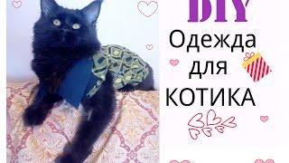 Смотреть онлайн Как сшить одежду для кота