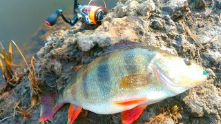 Рыба окуня ловля весной на реке
