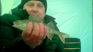 Рыбалка в хабаровск на недели гисметео